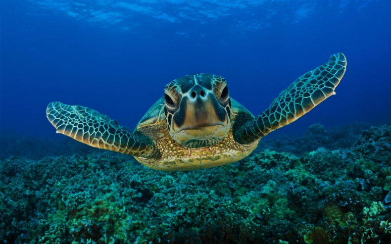 picture-of-a-sea-turtle-163