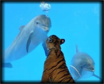 tiger-delfin2_tasrap